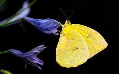 butterfly-1413678_1920